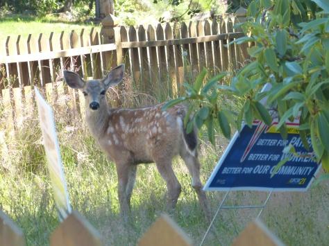 deer 002