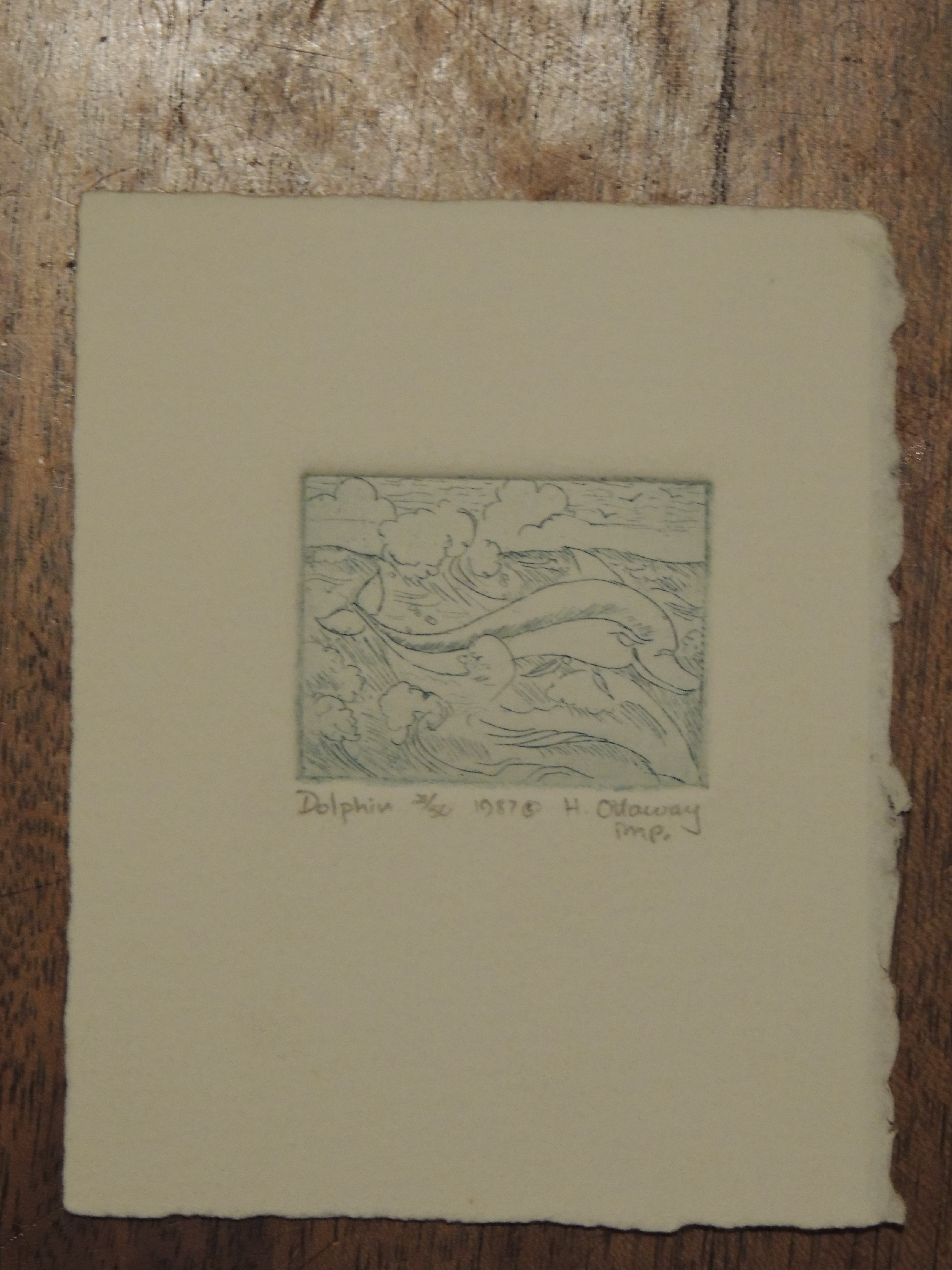 etching: Dolphin, by Helen Ottaway