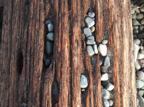 Beach drift log with pebbles