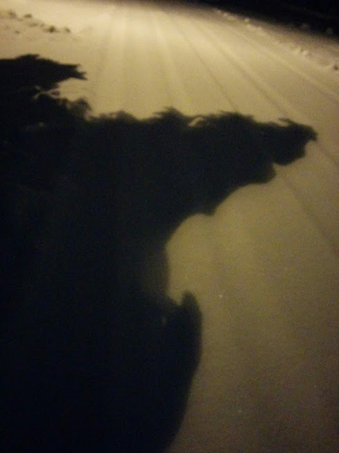 Shadow on snow: a tree or a monster?