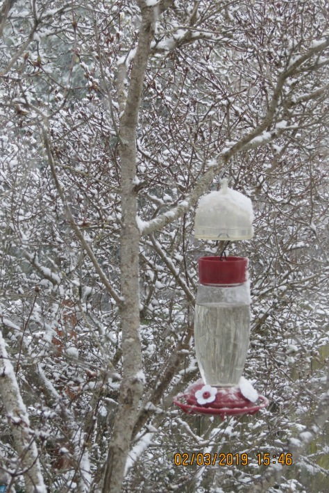 hummingbird feeder in a snowy bush