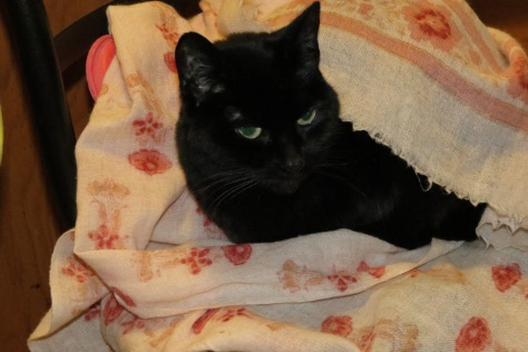 Black cat relaxed on a pink flowered wool scarf with a hot water bottle.