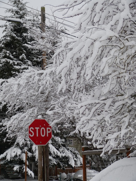 Bright red stop sign in snow covered trees and street.