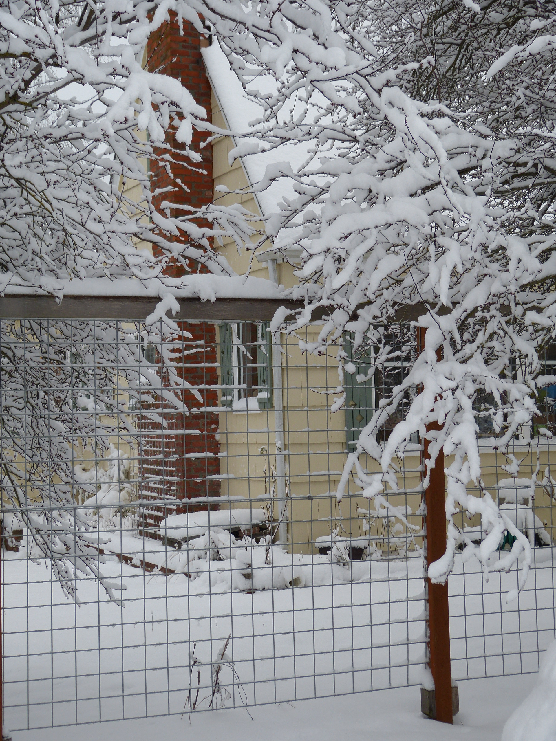Yellow house with green shutters and brown fence post and chimney, in snow covered bushes.