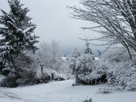 Snow covered Pacific Northwest trees and street.
