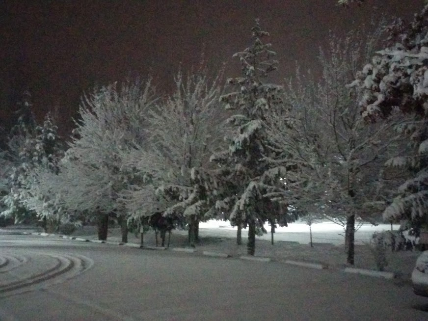 Trees in the dark, covered with snow and back lit by a street light.